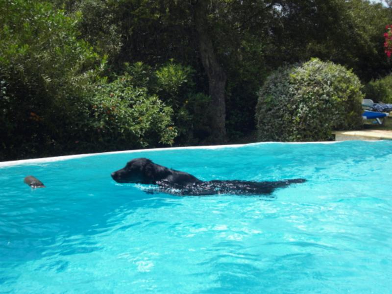 k-pool